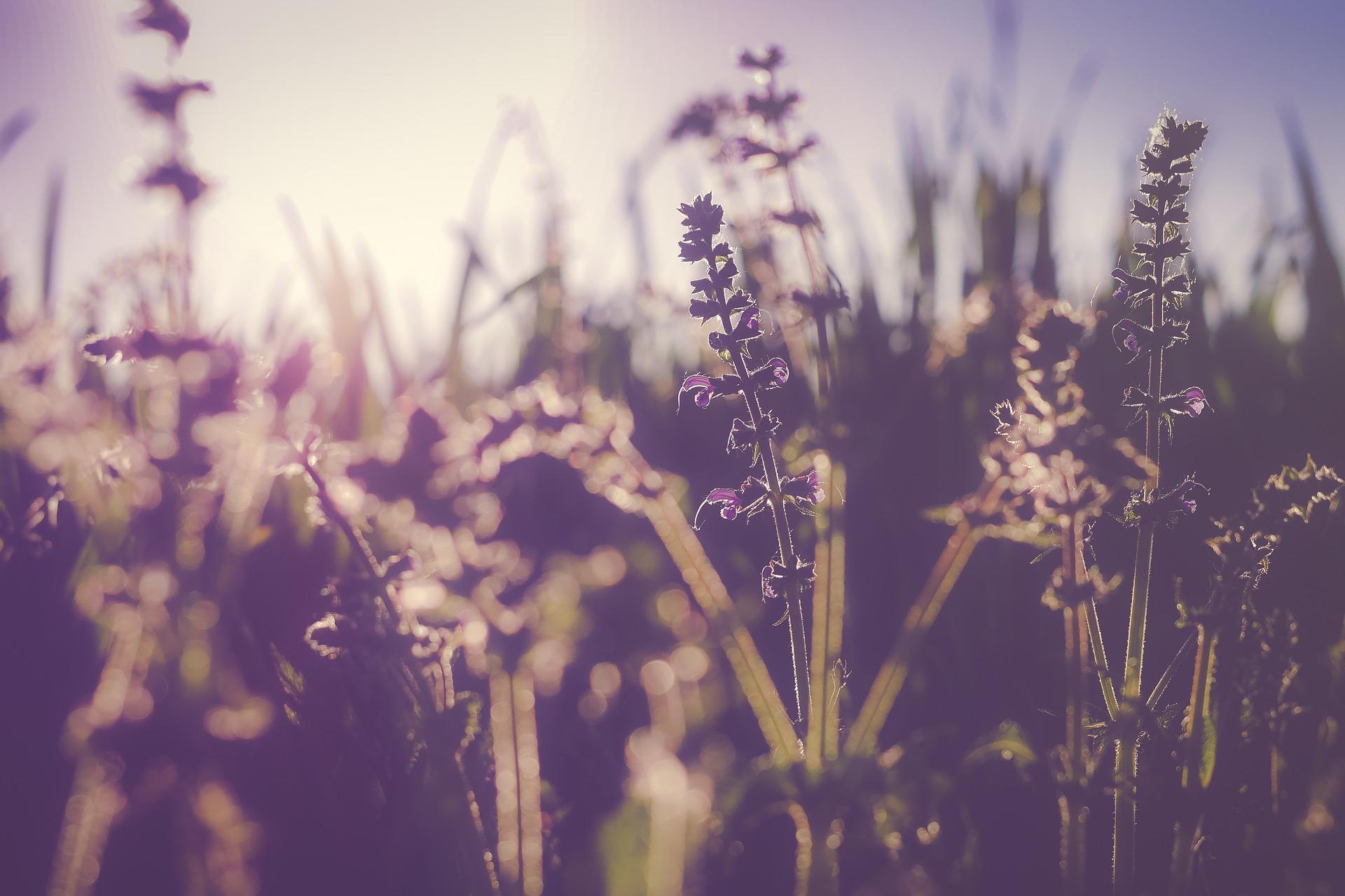 bloom-1838368_1920